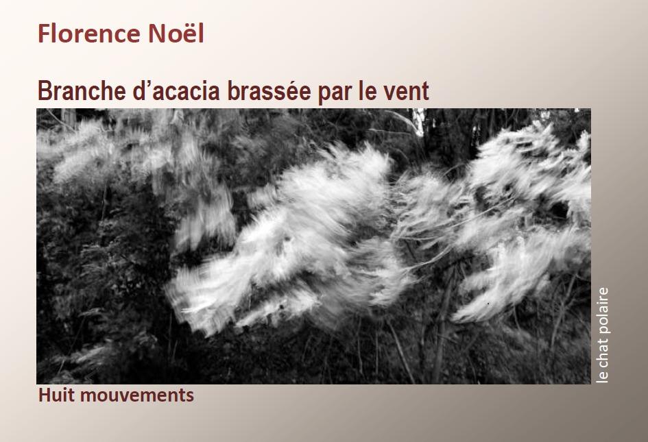 Branche d'acacia brassée par le vent de Florence Noël Éros frondaison