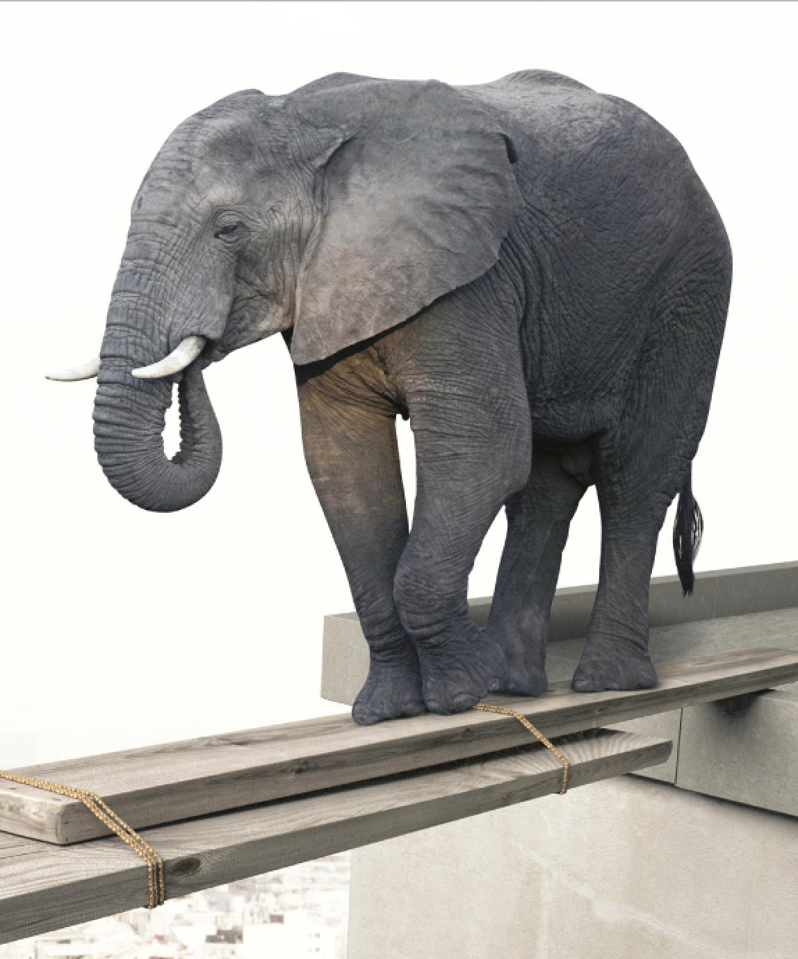 Macadam Circus Éléphanteau perdu dans une ville égarée